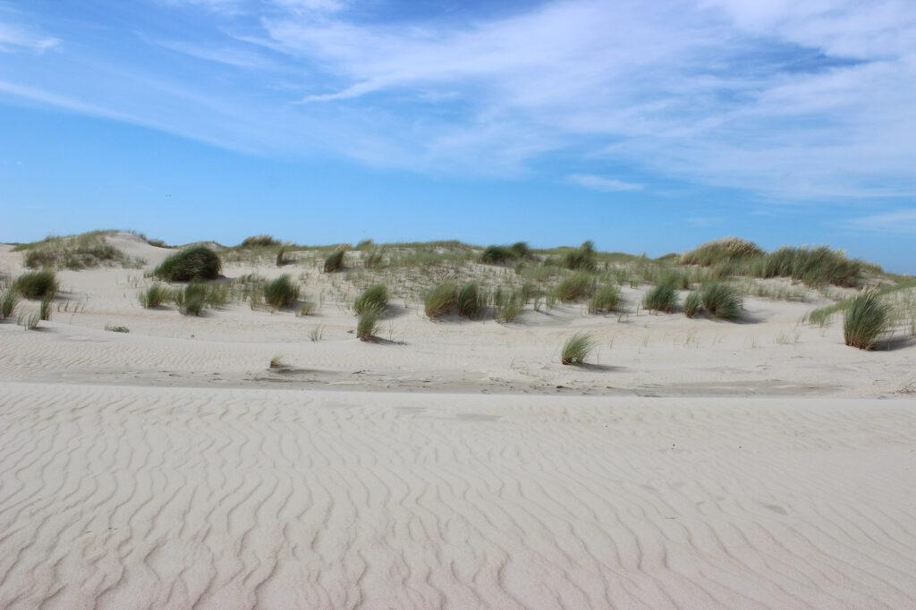 Strand en duinen op Texel